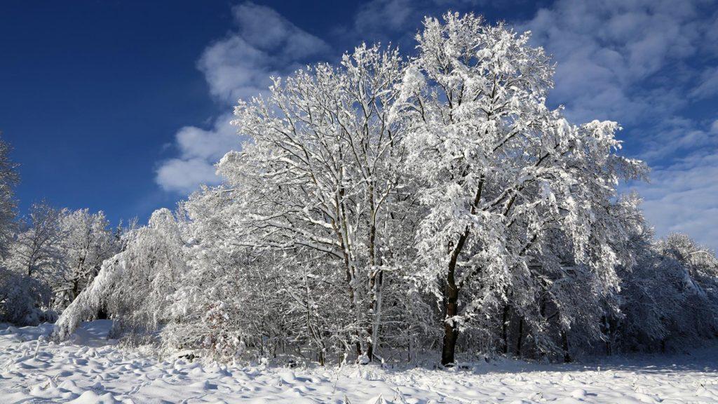Photo of snow on trees